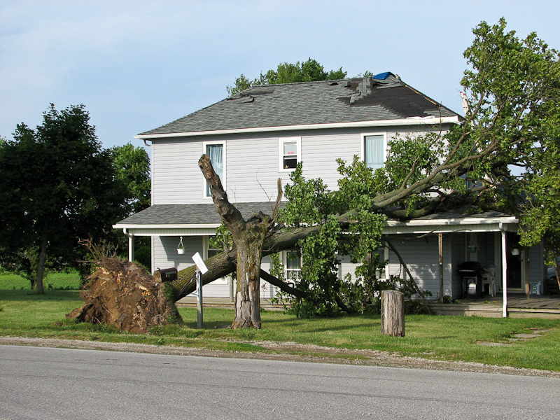 Wind-toppled tree fallen on house