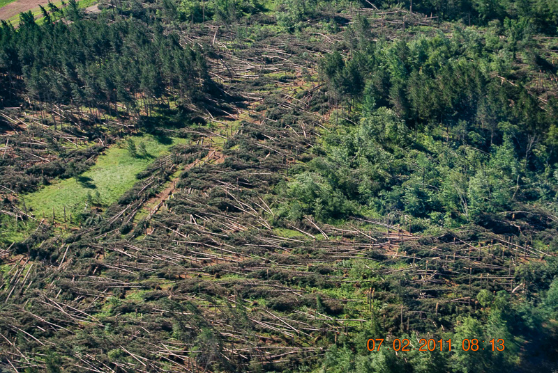 Aerial photo of trees felled by straight winds