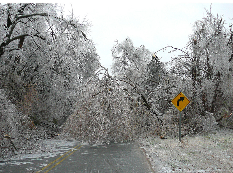 Ice storm damage to trees